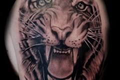 Paul-Tiger-1